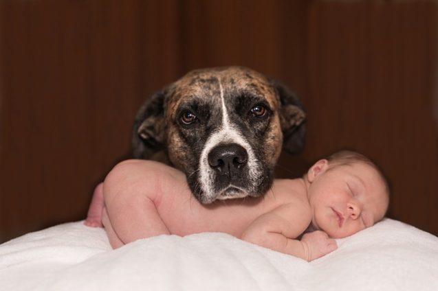 Arrivée d'un bébé avec un chien