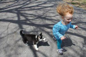 arrivée d'un bébé avec un chien Devis Services