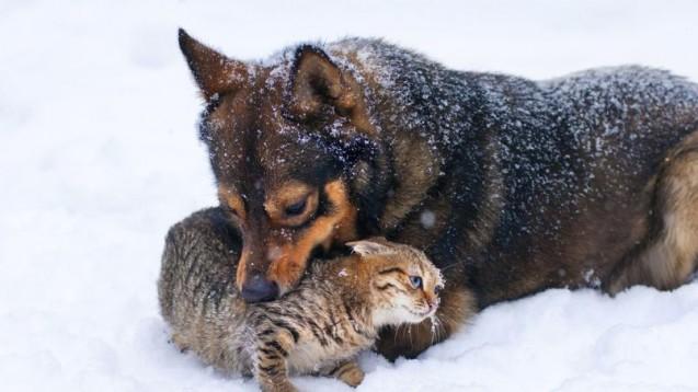 Assurance : Chiens et chats : faire face à l'hiver