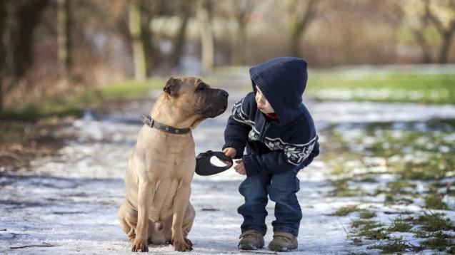 Animaux domestiques et enfants à chacun son traitement contre les poux