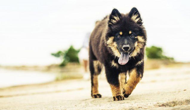 De nombreux chiens victimes de la leishmaniose