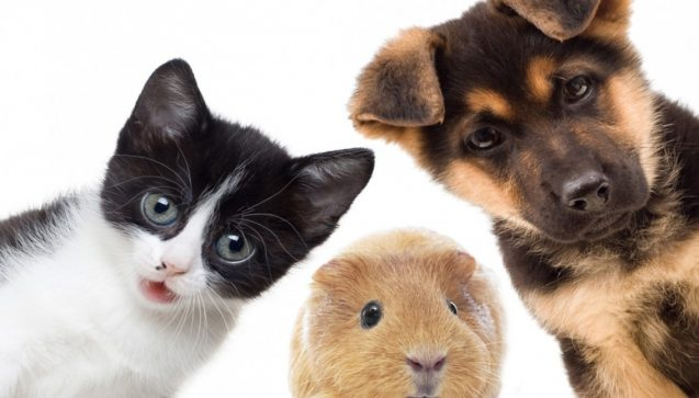 Assurance animal de compagnie : ce qu'il faut savoir
