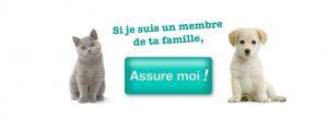 assurance animal de compagnie coûts frais remboursement