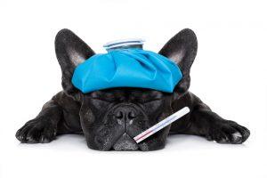 assurance animal de compagnie vaccinations frais médicaux